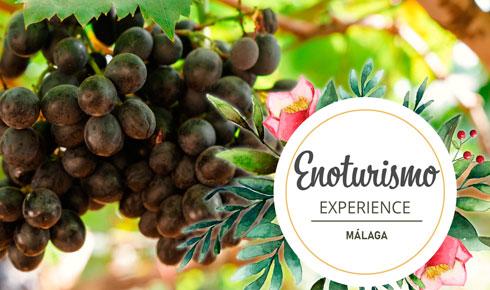 enoturismo-experience-special