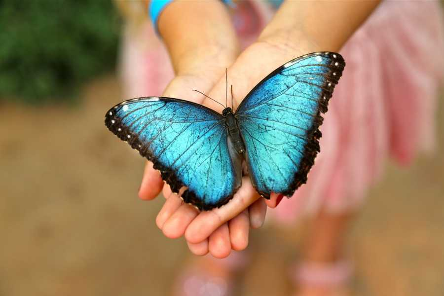 kids-sealife-mariposario-01