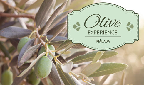 olive-experience-special